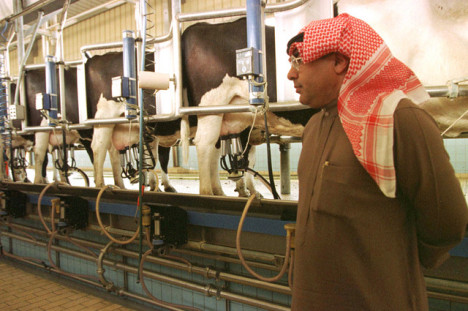 saudi milkproduction