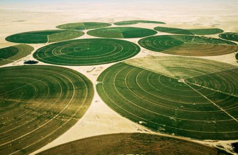 saudi-wheat-production